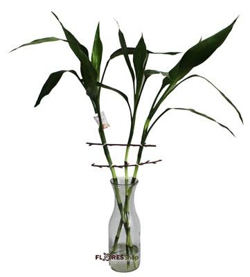 1939 Lucky-bamboo