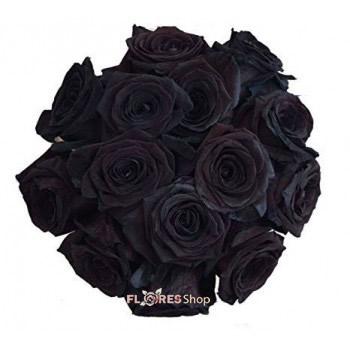 2556 Rosa Negra
