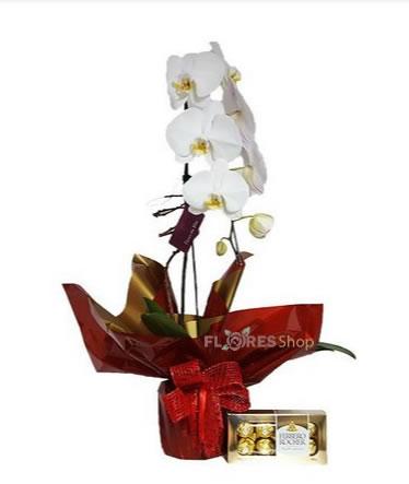 2564 Orquidea e Ferrero