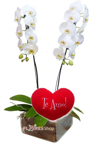 3383 ❤•·.··.·❤ Love Orquídea ❤•·.··.·❤