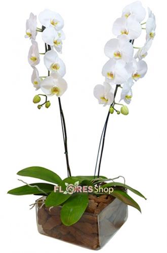 3385 Orquídeas Maravilhosas