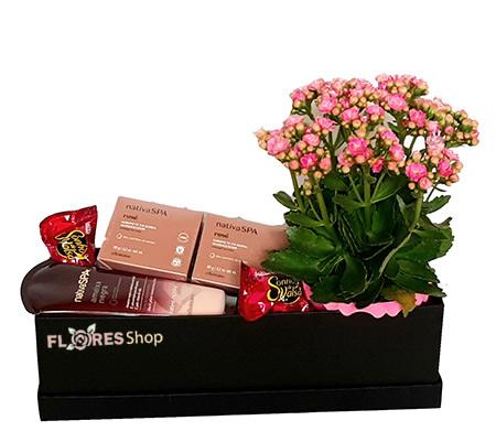 3763 Flores Cheirosas