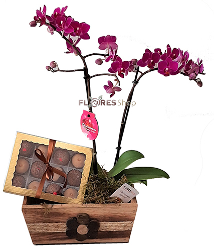 3854 Hum... Orquídea