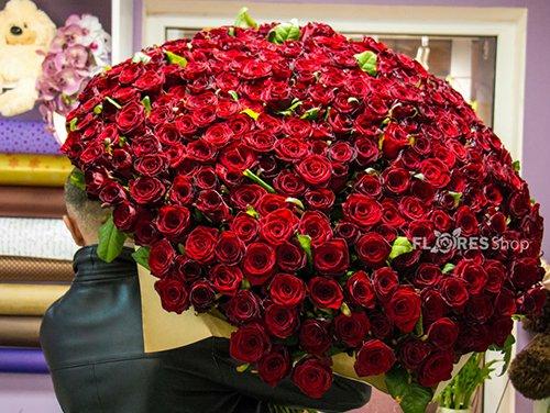 390 Loucura de Rosas Vermelhas
