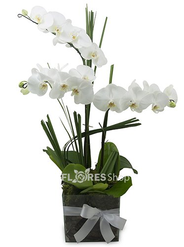 402 Trio de Orquídeas