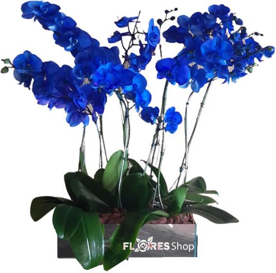 5095 Tudo Azul