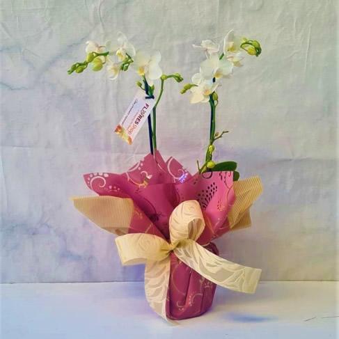 5138 Mini Orquídea Embalada Branca