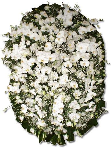555 Coroa Nobre de Orquídeas