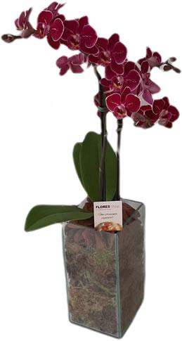 3878 Mini Orquídeas no Vidro