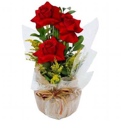 20 Trio de Rosas Vermelhas Colombiana