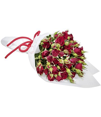 2617 Buquê de Mini Rosas Vermelhas em Celofane Branco