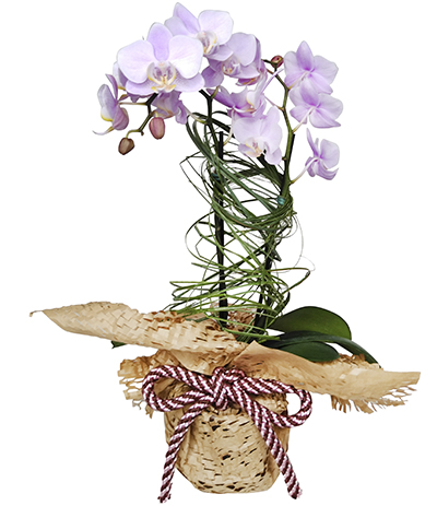 2673 Mini Orquídea Lilás em Papel Kraft