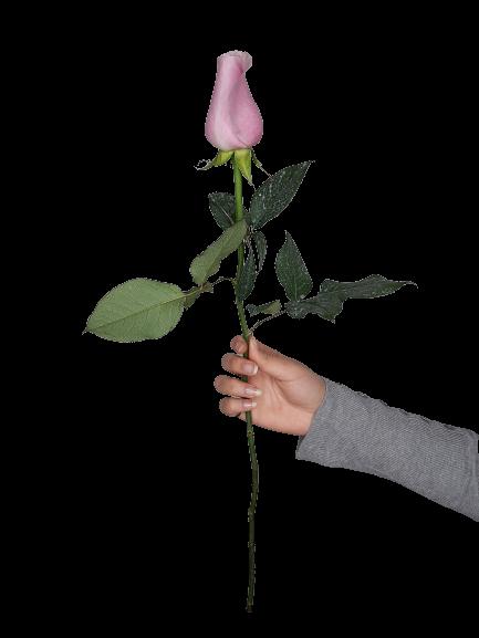 5334 Rosa Lilás