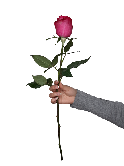 5335 Rosa Pink
