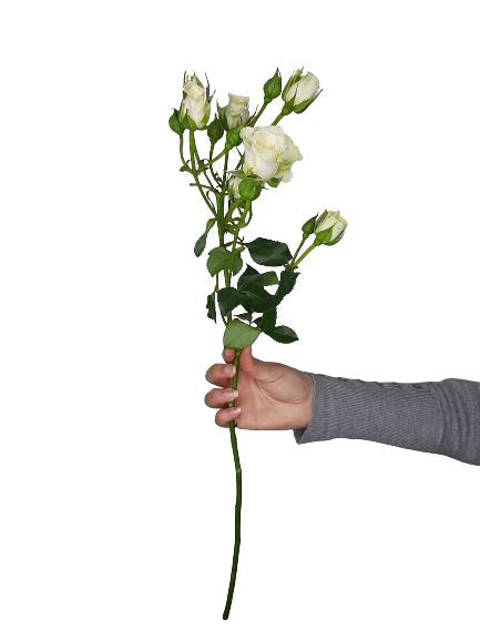 5340 Mini Rosas Brancas