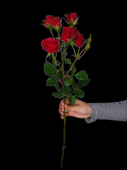 5341 Mini Rosas Pink