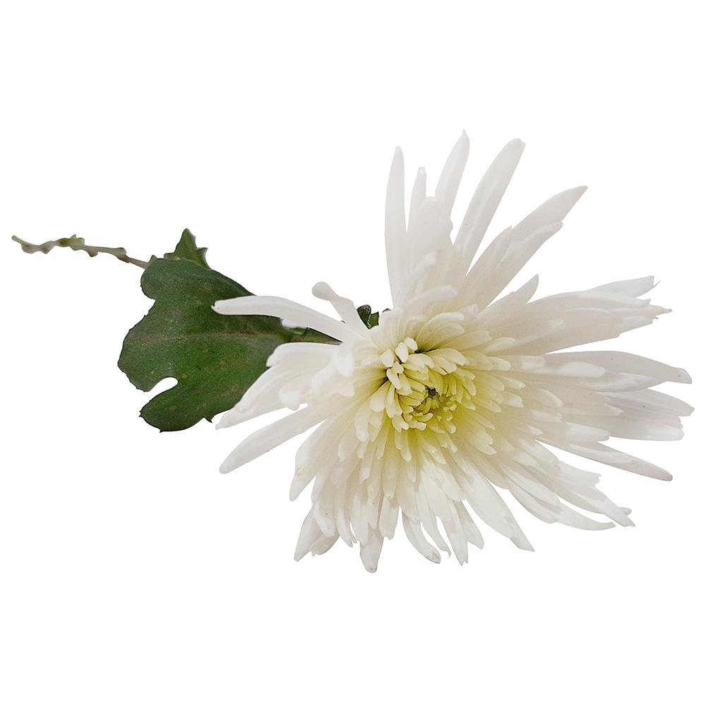5396 Anastásia Branca