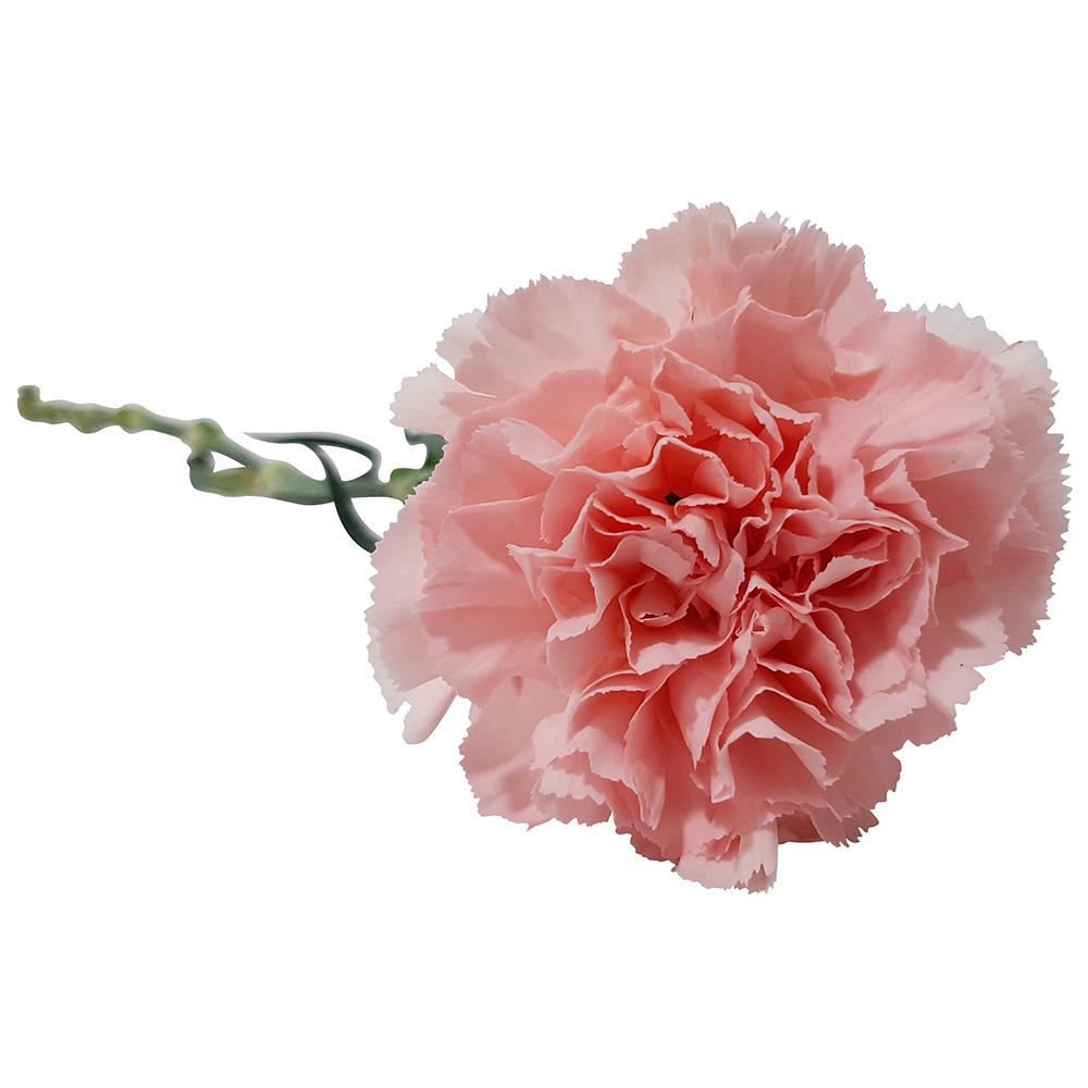 5402 Cravo Rosa